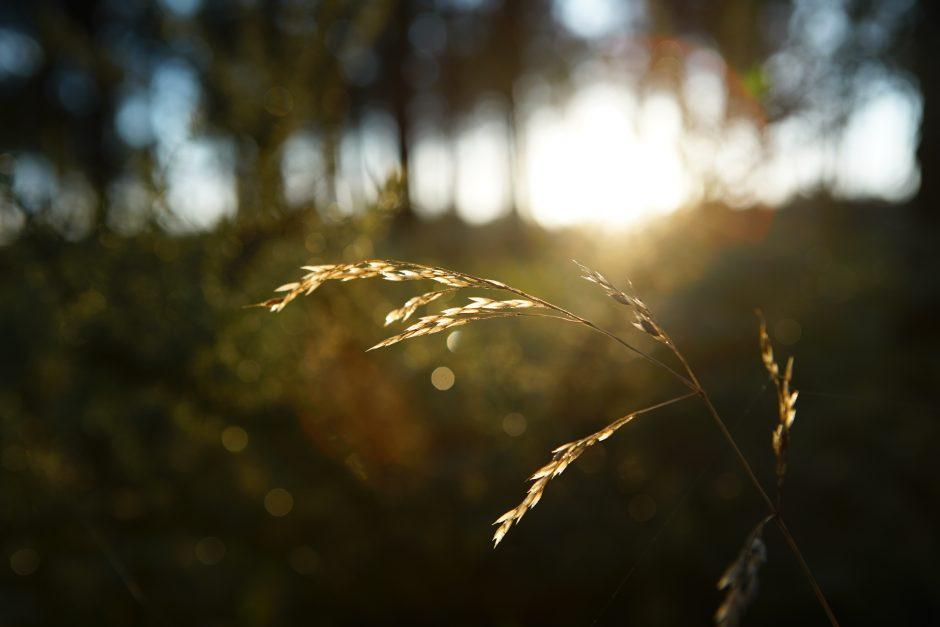 foret blé landes