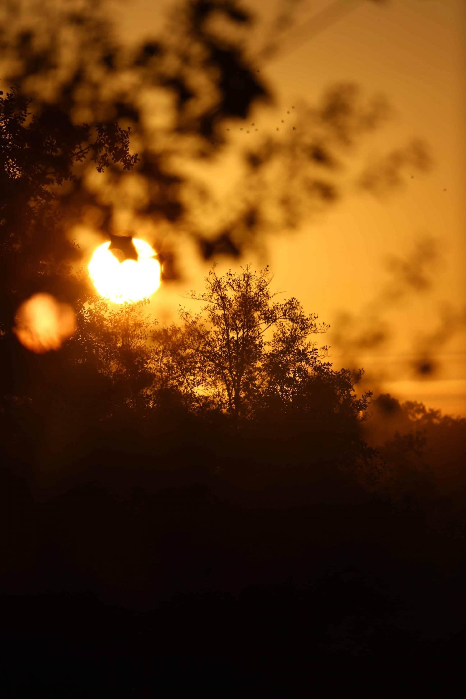 Lumiere sunset landes coucher de soleil